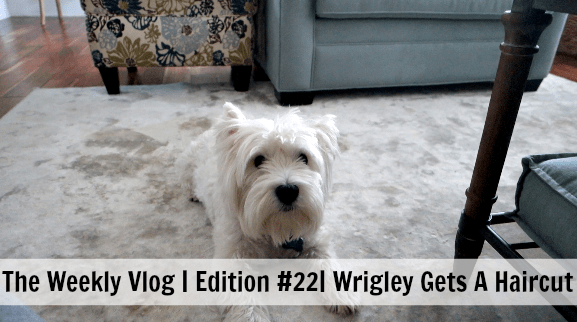 The Weekly Vlog Edition #22 Wrigley Gets A Haircut
